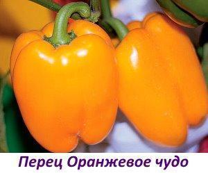 Сорт Оранжевое чудо