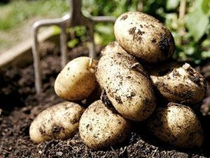 Посадка картофеля видео