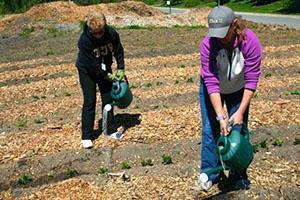 Внесение удобрений на кусты картофеля