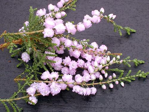 Нежные цветочные веточки