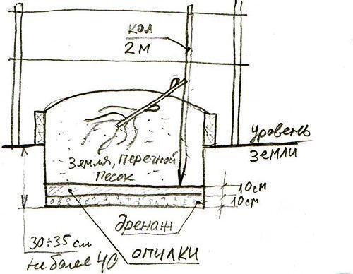 Схема посадки винограда в Подмосковье