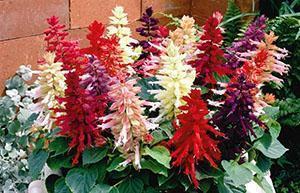 Как правильно поливать цветы Садовые цветы