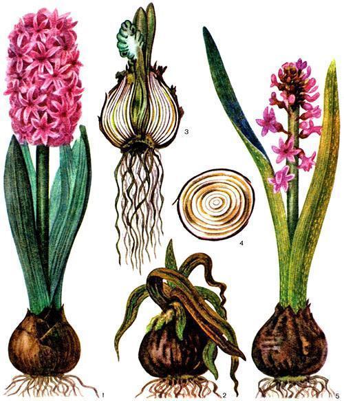 Вид здорового и больных растений