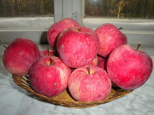 определить по фото сорт яблок