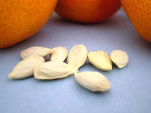 Апельсиновые косточки