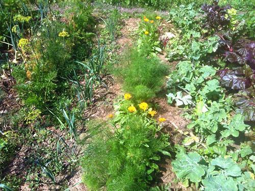 Чистая от сорняков грядка и соблюдение севооборота