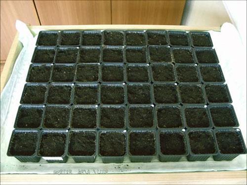 Кассеты с почвой для посадки редиса в теплице