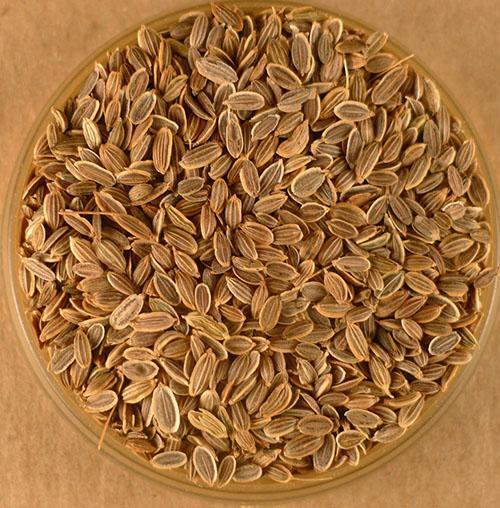 Лечебные семена укропа
