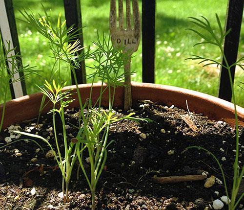 Молодые растения нуждаются в свете и влаге