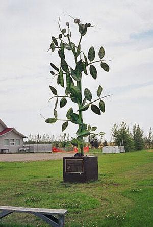 Памятник сахарному гороху