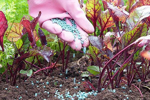 Покраснение ботвы при повышенной кислотности почвы