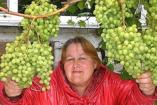 Сибирский виноград находится в
