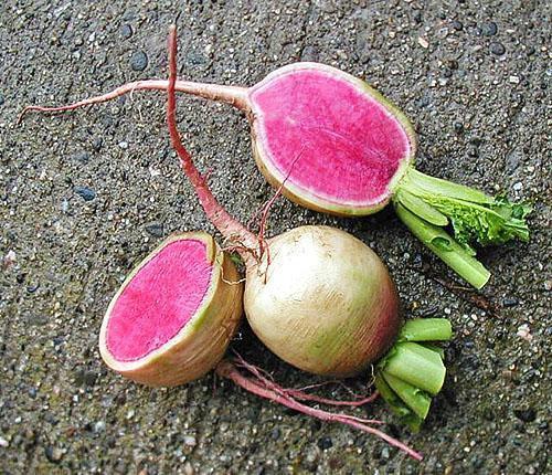 Только при правильном уходе возможен качественный урожай