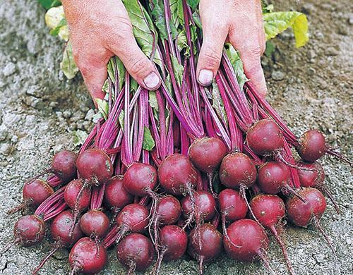 Урожай с грядки