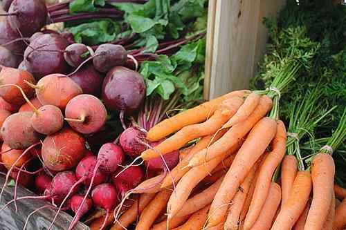 Когда сажать под зиму морковь и свеклу