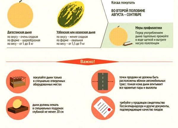 Что нужно знать при покупке дыни