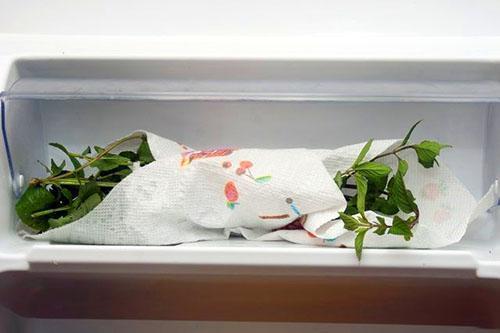 Хранение свежей мяты в холодильнике