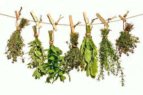 Как сушить листья мяты для чая пошагово с фото