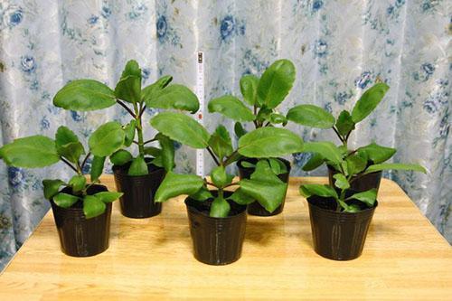 Подрастают молодые растения