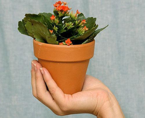 Правильный уход стимулирует к цветению