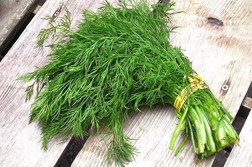 При правильном уходе урожайность кустового укропа достигает 5 кг с 1 кв. м. посевов