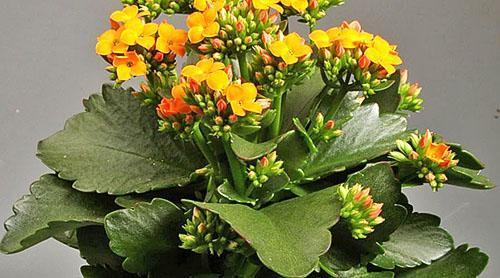 Ухоженное растение