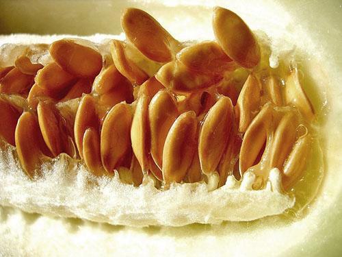 Картинки по запросу семечки от недозрелых дынь