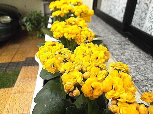 Яркие цветы на подоконнике