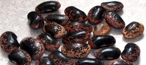 Черная фасоль не подвергается нападению зерновки
