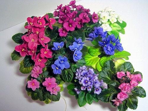 Для цветения фиалке нужен горшок небольшого размера