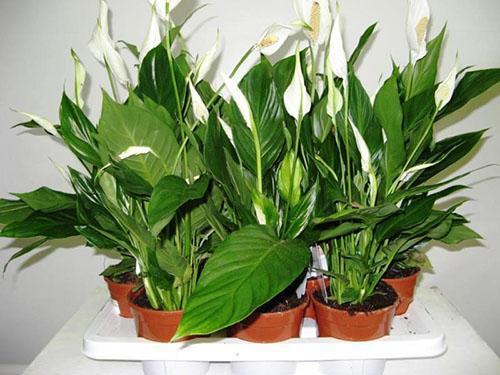 Отлично развиваются растения в правильно подобранном грунте