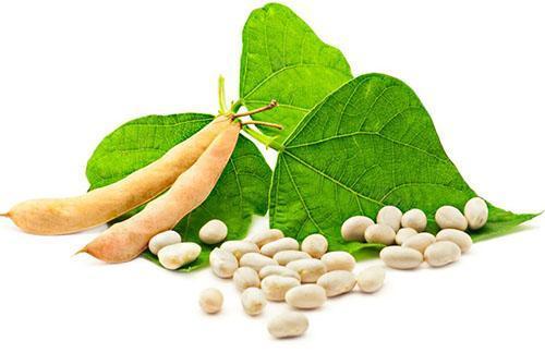 Плоды белой фасоли
