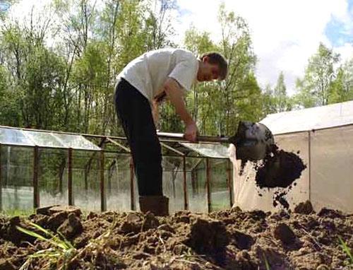 Подготовка грядки к посадке фасоли