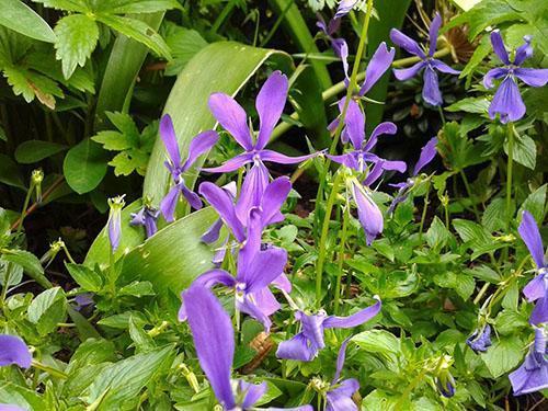 Правильный уход за растением обеспечит обильное цветение