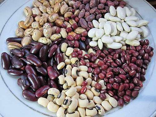Семена разных сортов спаржевой фасоли