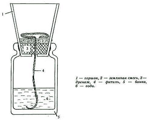 Схема фитильного полива