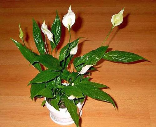 Фото искуственных цветов для дома
