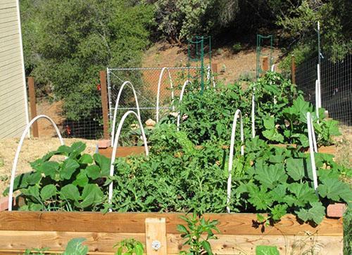 Своевременное внесение удобрений - гарантия хорошего урожая