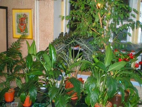 Пахлава в домашних условиях рецепт с фото 66