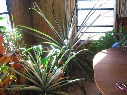 Для хорошего развития растений нужно просторное светлое место