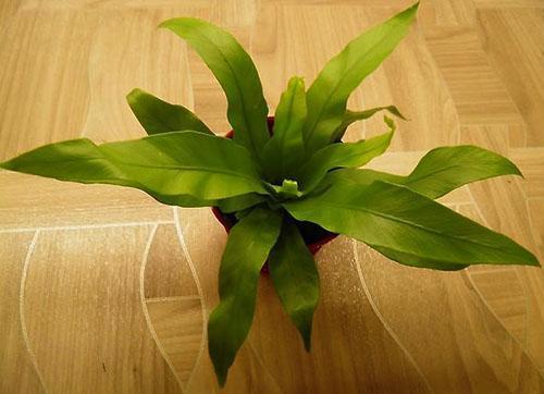 Для хорошего развития растения нужен специальный грунт