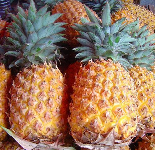 Группа сортов ананасов «Spanish»
