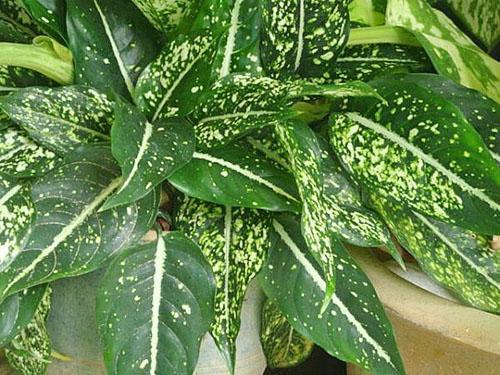 Красивое растение в интерьере помещения