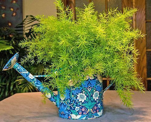 вредители в земле комнатных растений с фото