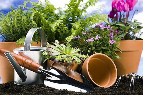 Калий для растений в домашних условиях