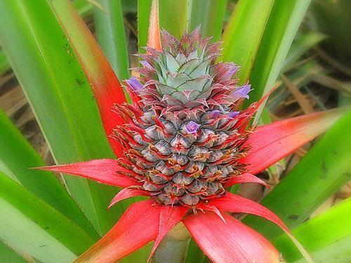 По завершению цветения развивается плод