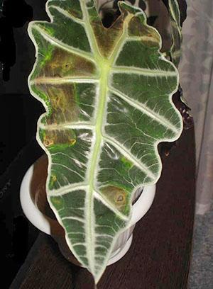 Растение требует немедленного вмешательства и помощи