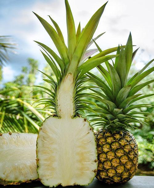 Сорт ананасов Кью