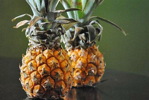 Сорт ананасов Pernambuco