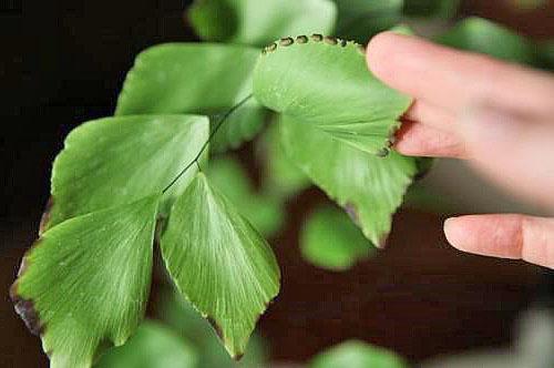 Срочно нужно провести обработку растения специальными средствами